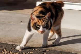 三毛猫の画像 p1_1