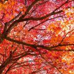 素晴らしい秋