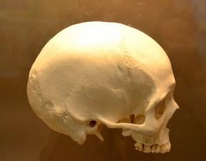 新しい体に乗り換えることができる時代が来るかも?!医学の進歩により頭部移植手術が可能になる?!