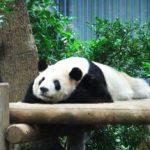 パンダはなぜかわいいのか?