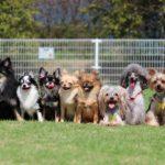 犬は種類によって寿命に違いがある?!小型犬は大型犬と比べると長生きしやすい!?犬を長生きさせる方法も知っとく?!