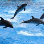 イルカって頭が良いの?なんとイルカとクジラ、シャチは仲間?イルカの意外な一面を知っとく?!