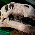 恐竜はワニじゃなくて鳥の先祖?!恐竜には羽毛が生えていた?ニワトリから恐竜復元!!