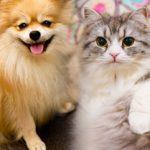あなたは、犬派(犬好き)?猫派(猫好き)?犬派と猫派の特徴を知ってみてはいかが?!