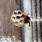 ハチに遭遇したり、ハチに刺された時、対処を間違えたら大変な事になるかも?!