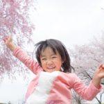 日本の国花は桜?!日本で最も親しまれている桜の「ソメイヨシノ」もサクランボができる!?