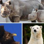 多くの人は知らないが今日も多くの動植物が絶滅している!?絶滅危惧種について知ることから始めてみてはいかが?!