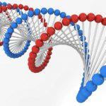 遺伝子で基本は決まるが全てが決まるわけじゃない?!DNA・遺伝子の不思議!?